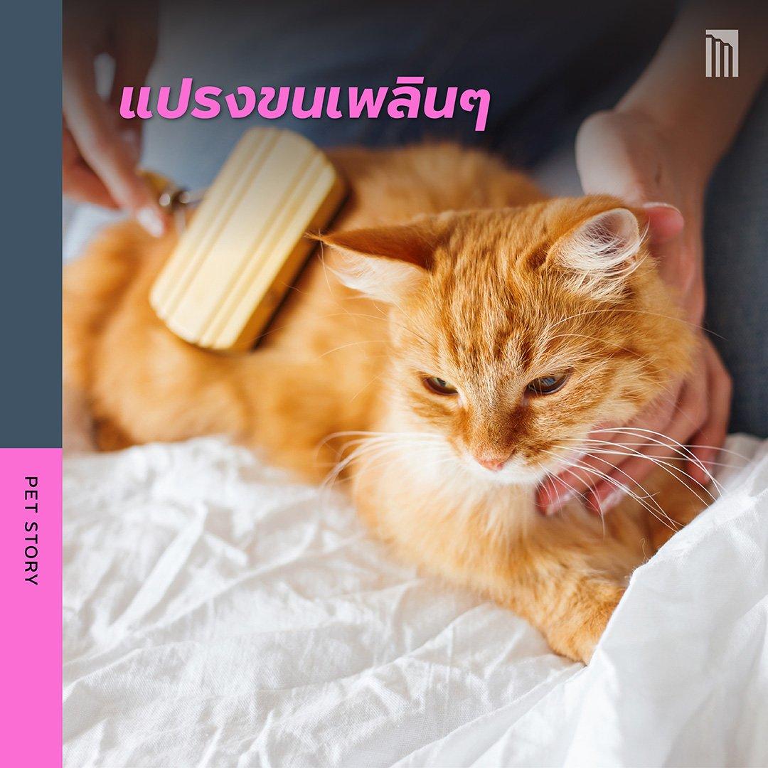210519-ชวนชาวทาส-มาเอาใจแมว_FB-Inside-1.4.jpg
