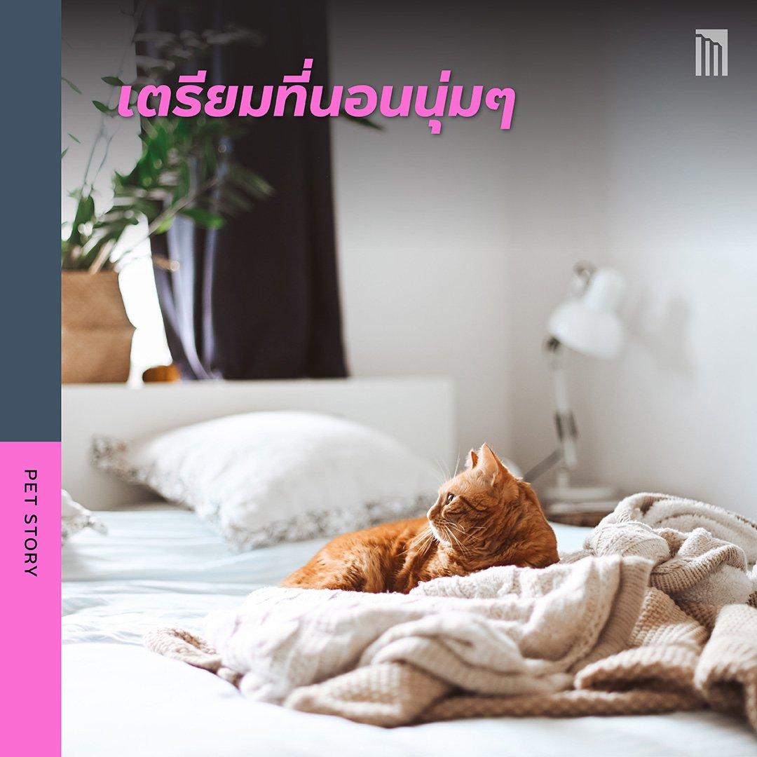210519-ชวนชาวทาส-มาเอาใจแมว_FB-Inside-1.5.jpg