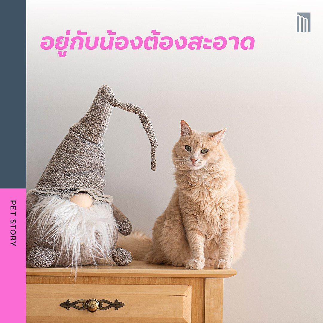 210519-ชวนชาวทาส-มาเอาใจแมว_FB-Inside-1.7.jpg