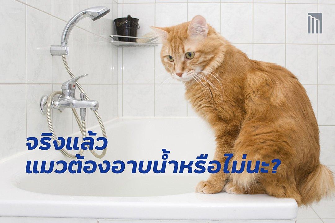 210427-จริงแล้ว-แมวต้องอาบน้ำหรือไม่นะ_FB-Cover-1.1.jpg