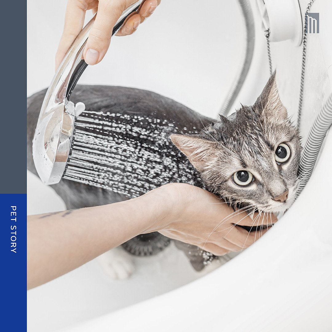 210427-จริงแล้ว-แมวต้องอาบน้ำหรือไม่นะ_FB-Inside-1.2.jpg