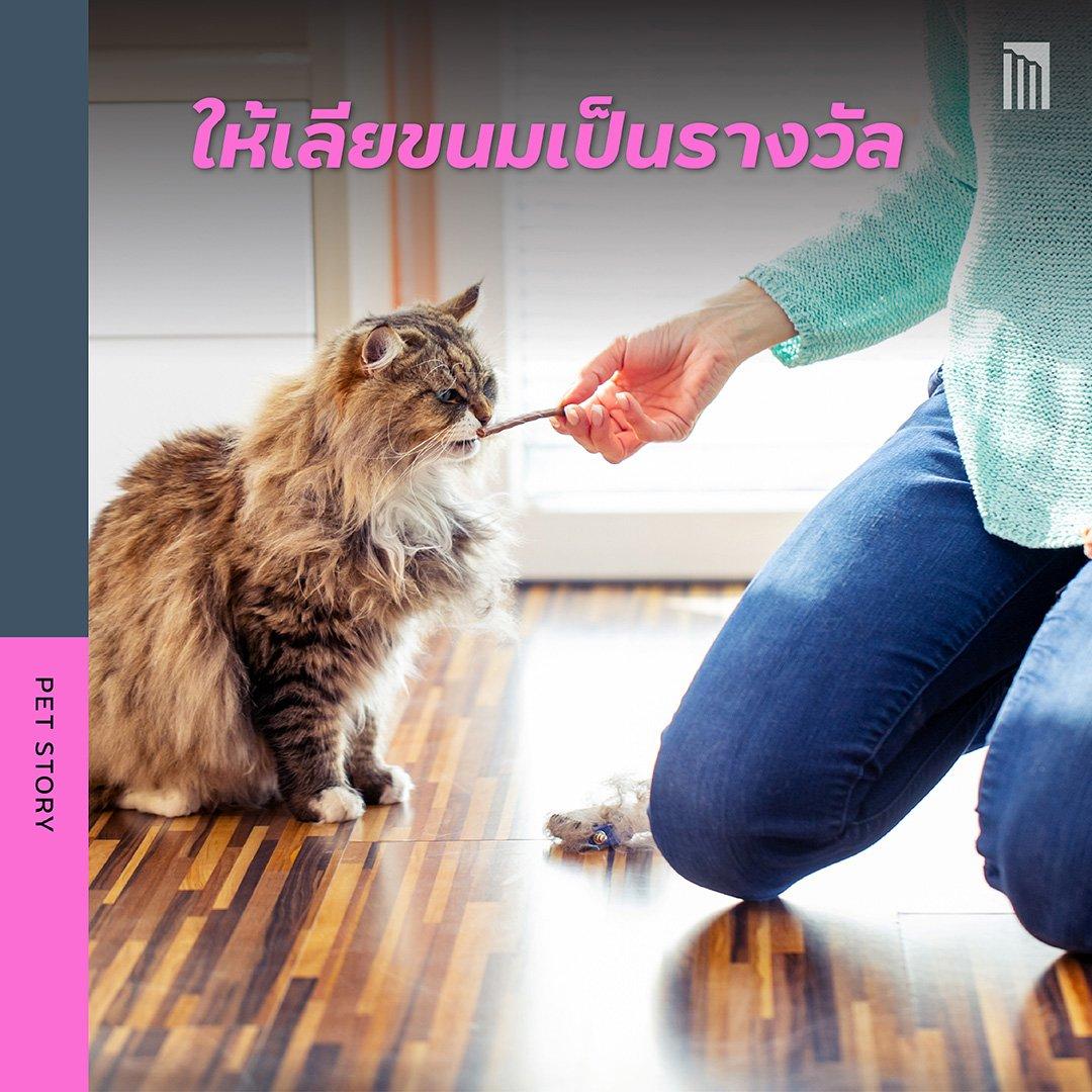210519-ชวนชาวทาส-มาเอาใจแมว_FB-Inside-1.3.jpg