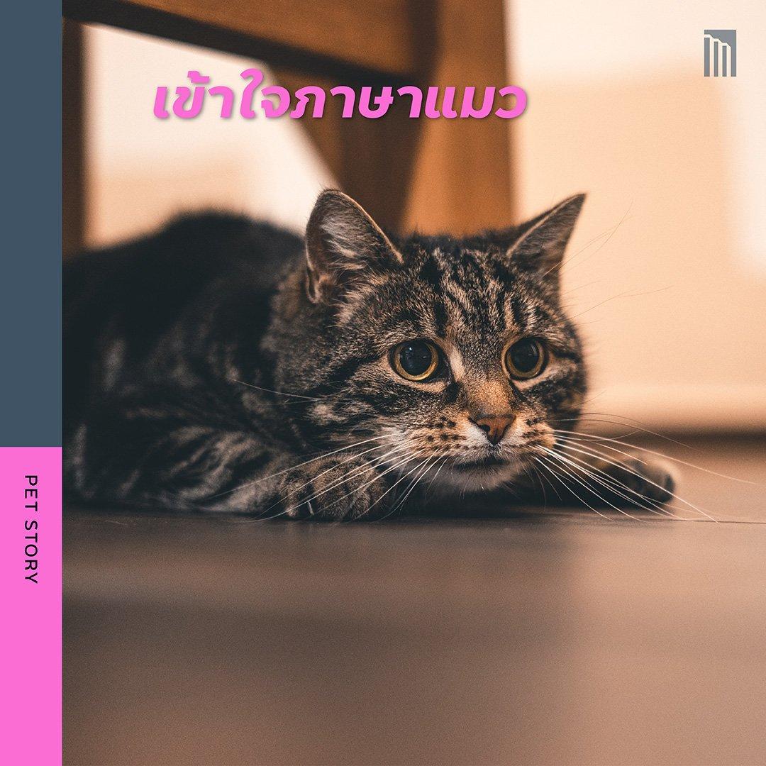 210519-ชวนชาวทาส-มาเอาใจแมว_FB-Inside-1.6.jpg