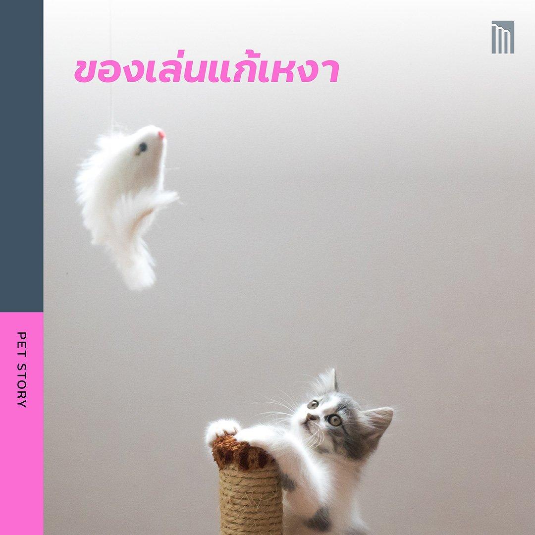 210519-ชวนชาวทาส-มาเอาใจแมว_FB-Inside-1.8.jpg