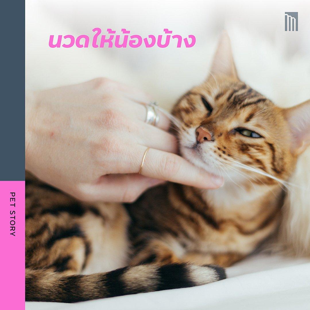 210519-ชวนชาวทาส-มาเอาใจแมว_FB-Inside-1.9.jpg