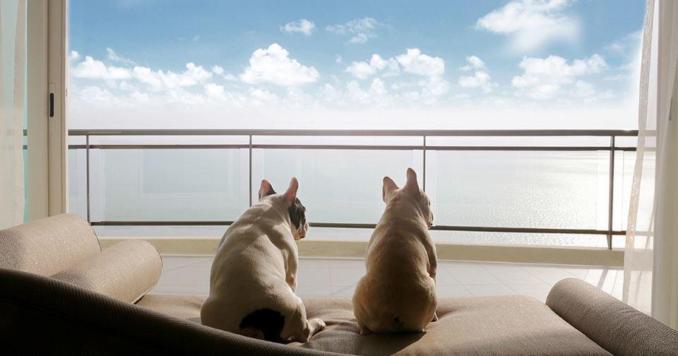 เคล็ดลับเลี้ยงสัตว์เพื่อนรักในคอนโด ให้ไม่อึดอัดเพื่อให้อยู่ร่วมกันได้อย่างมีความสุข