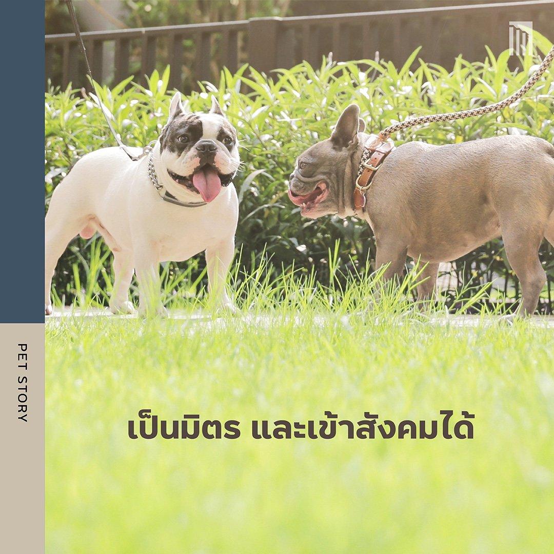 210610-PET-GUIDE-ฝึกน้องให้มีวินัย-ใครเห็นก็เอ็นดู_FB-Inside-1.8.jpg
