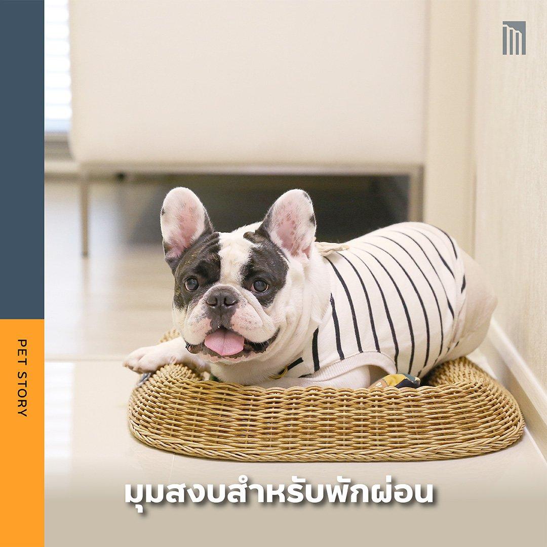 PET-GUIDE-เตรียมพื้นที่ให้พร้อม-ก่อนเอาน้องเข้าคอนโด_FB-Inside-1.3.jpg