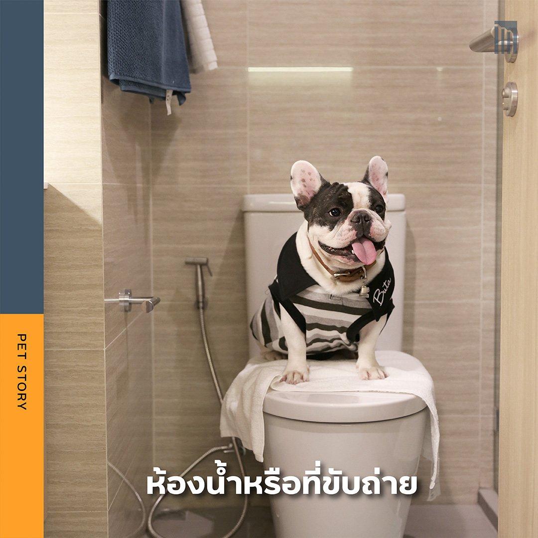 PET-GUIDE-เตรียมพื้นที่ให้พร้อม-ก่อนเอาน้องเข้าคอนโด_FB-Inside-1.4.jpg