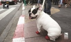 Pet Friendly Residences